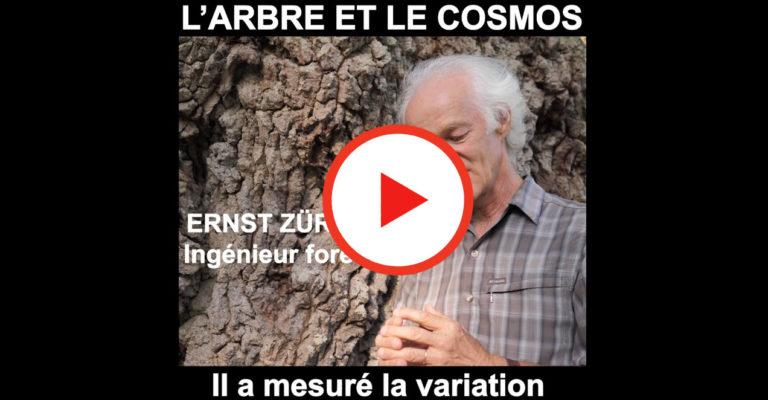 Corrélation entre le bourgeon de chêne et la planète mars